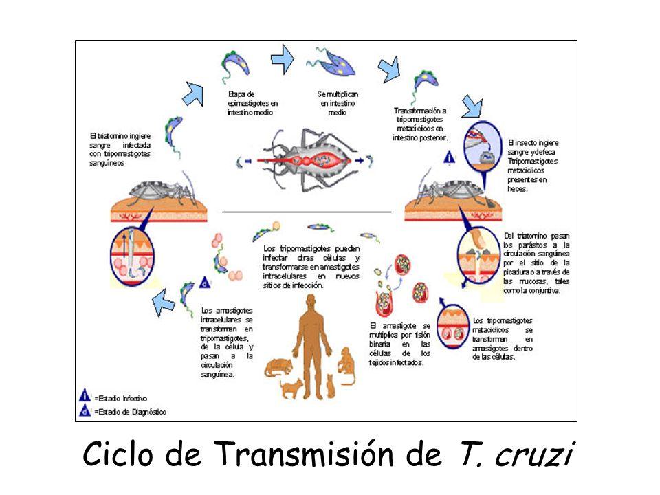 Objetivo: Eficientizar el diagnóstico temprano de la Enfermedad de Chagas y otras enfermedades en muestras sanguíneas.