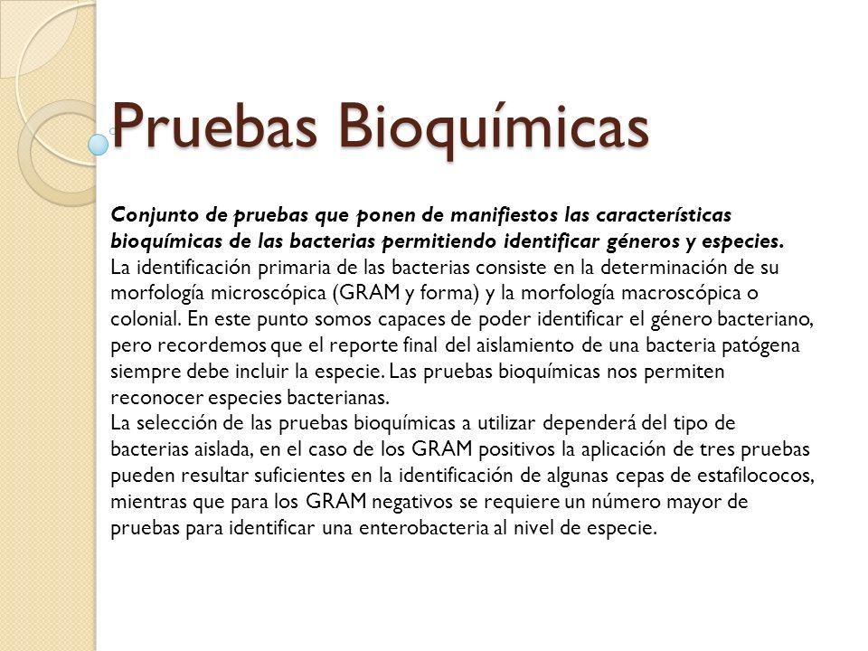Pruebas Bioquímicas Conjunto de pruebas que ponen de manifiestos las características bioquímicas de las bacterias permitiendo identificar géneros y es