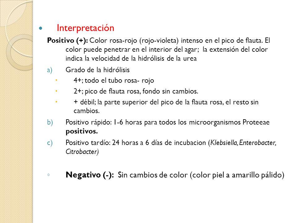 Interpretación Positivo (+): Color rosa-rojo (rojo-violeta) intenso en el pico de flauta. El color puede penetrar en el interior del agar; la extensió