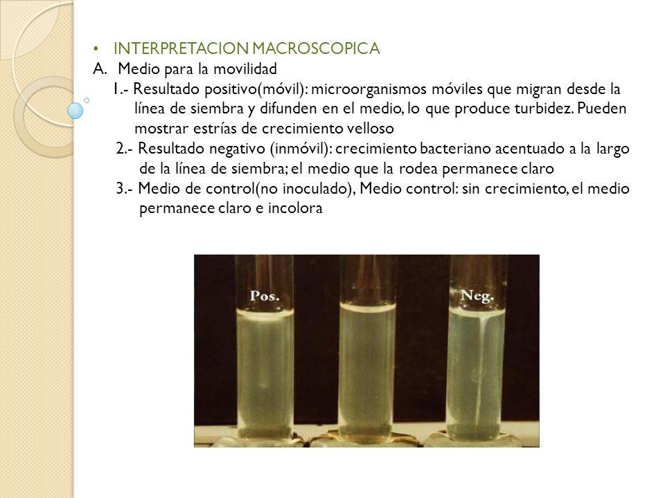 INTERPRETACION MACROSCOPICA A.Medio para la movilidad 1.- Resultado positivo(móvil): microorganismos móviles que migran desde la línea de siembra y di