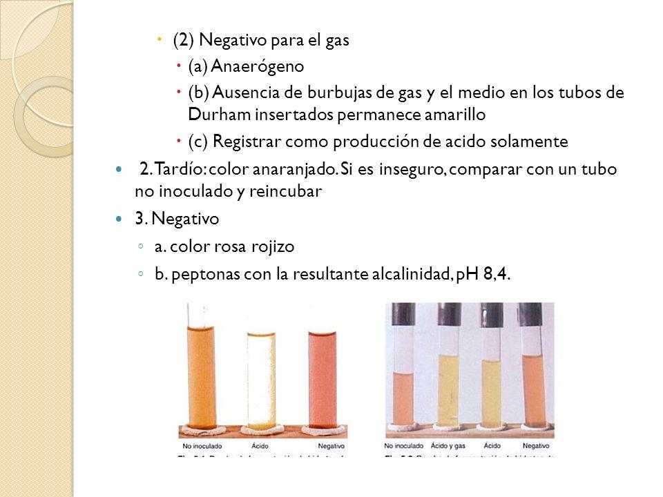 (2) Negativo para el gas (a) Anaerógeno (b) Ausencia de burbujas de gas y el medio en los tubos de Durham insertados permanece amarillo (c) Registrar
