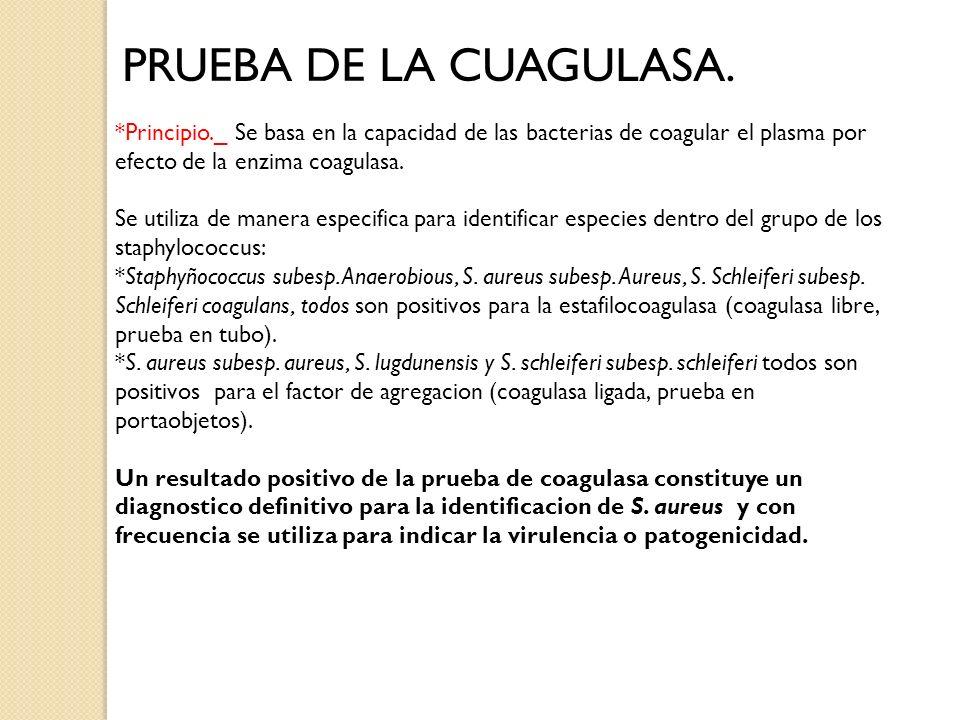PRUEBA DE LA CUAGULASA. *Principio._ Se basa en la capacidad de las bacterias de coagular el plasma por efecto de la enzima coagulasa. Se utiliza de m