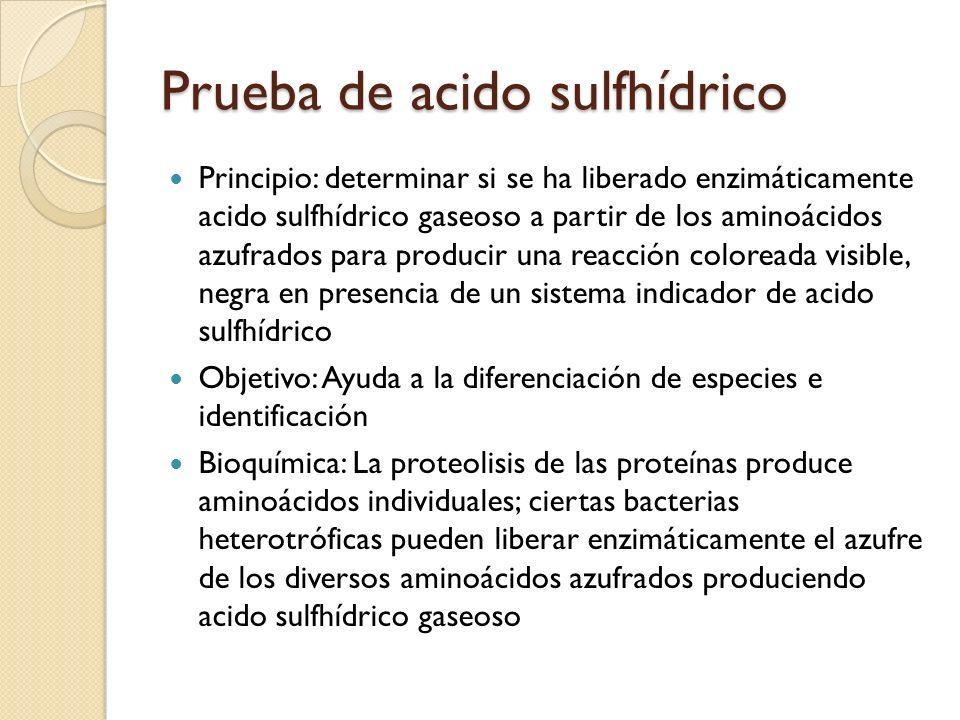 Prueba de acido sulfhídrico Principio: determinar si se ha liberado enzimáticamente acido sulfhídrico gaseoso a partir de los aminoácidos azufrados pa