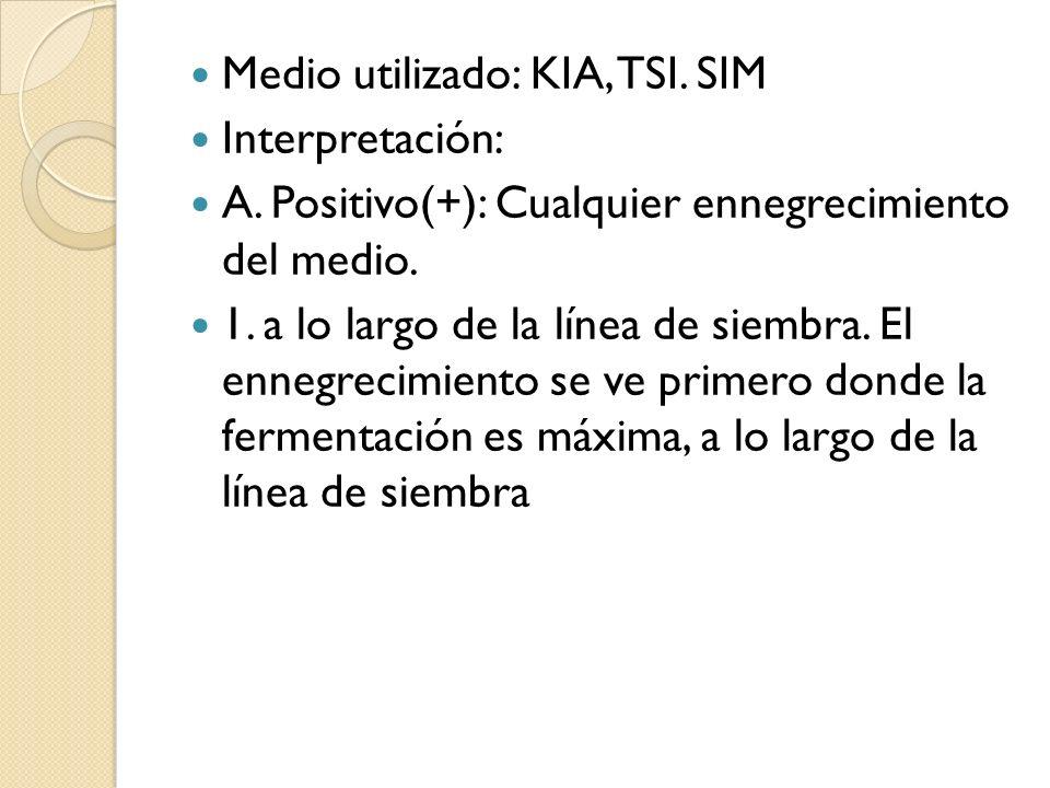 Medio utilizado: KIA, TSI. SIM Interpretación: A. Positivo(+): Cualquier ennegrecimiento del medio. 1. a lo largo de la línea de siembra. El ennegreci