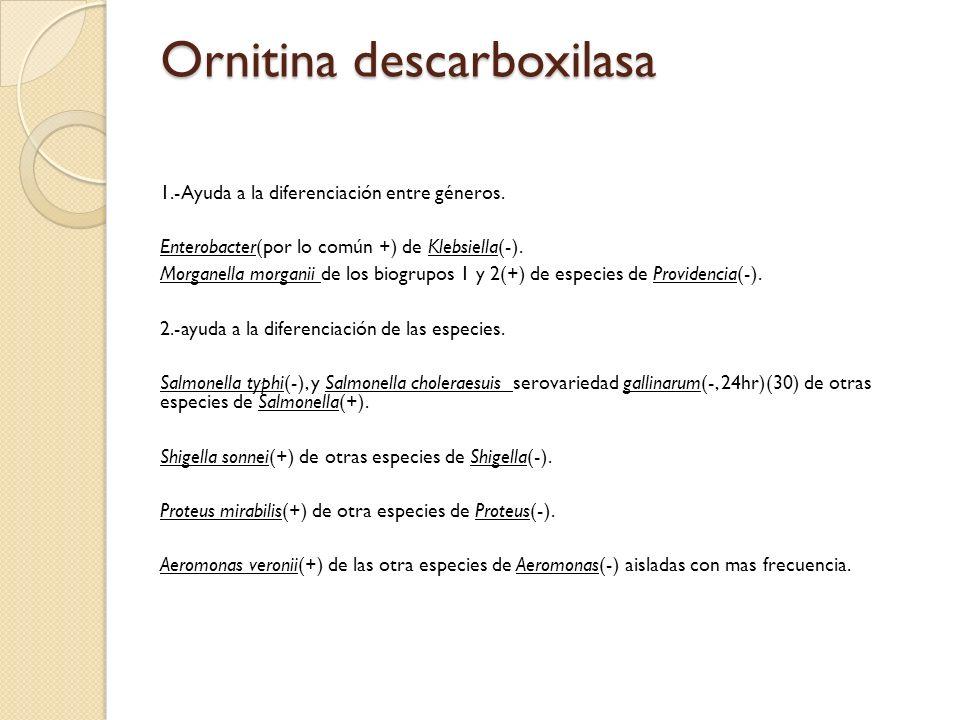 Ornitina descarboxilasa 1.-Ayuda a la diferenciación entre géneros. Enterobacter(por lo común +) de Klebsiella(-). Morganella morganii de los biogrupo