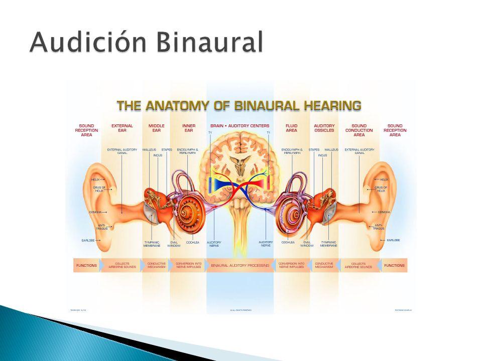 Pruebas de Interacción Binaural Fusión Binaural - Lista de 25 palabras.