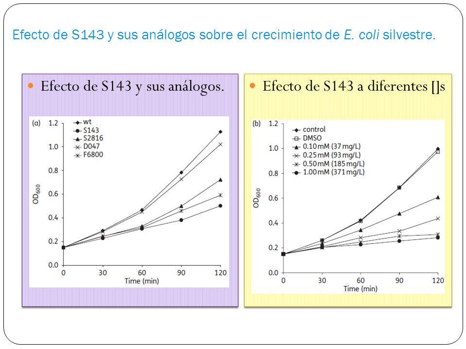 Efecto de S143 y sus análogos sobre el crecimiento de E.