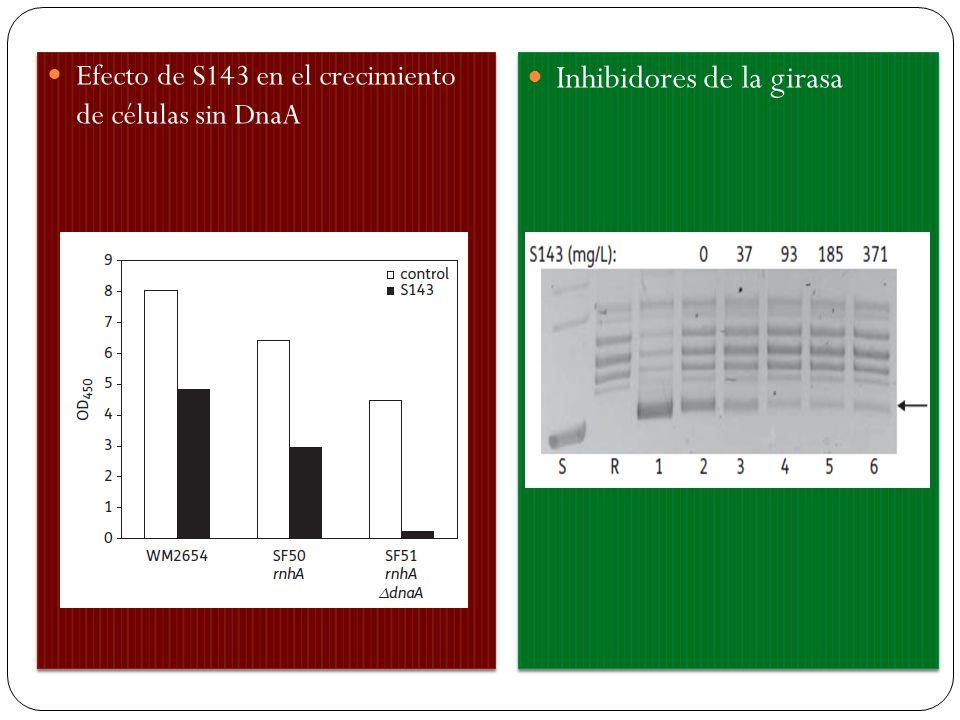 . Efecto de S143 en el crecimiento de células sin DnaA Inhibidores de la girasa