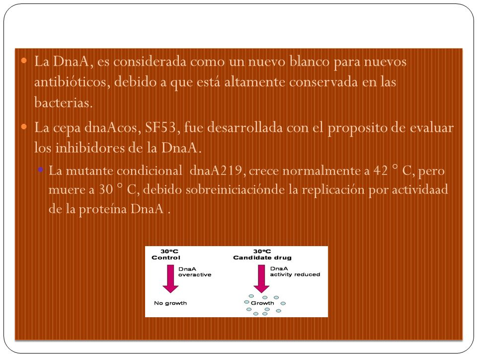 La DnaA, es considerada como un nuevo blanco para nuevos antibióticos, debido a que está altamente conservada en las bacterias.