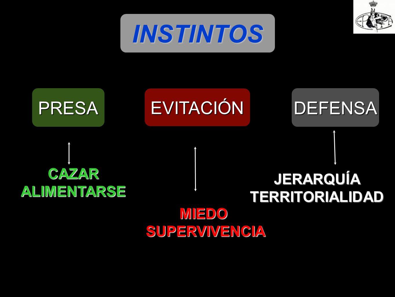 INSTINTOS PRESA EVITACIÓN DEFENSA MIEDO SUPERVIVENCIA SUPERVIVENCIA JERARQUÍATERRITORIALIDAD CAZAR ALIMENTARSE