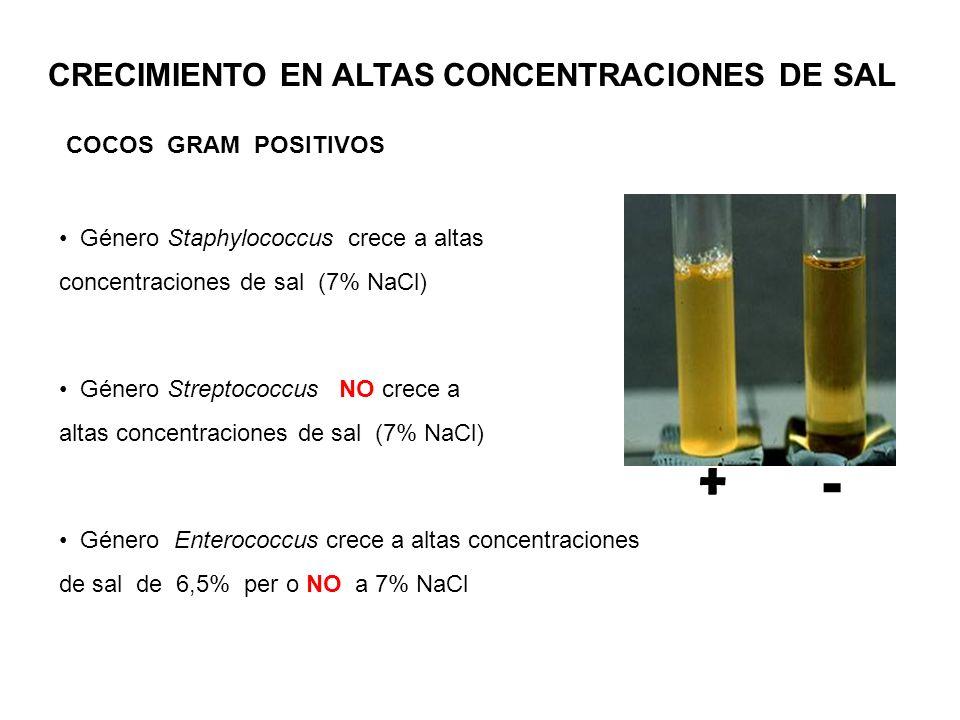 - + CRECIMIENTO EN ALTAS CONCENTRACIONES DE SAL COCOS GRAM POSITIVOS Género Staphylococcus crece a altas concentraciones de sal (7% NaCl) Género Strep