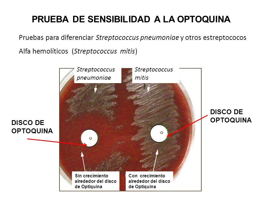 Pruebas para diferenciar Streptococcus pneumoniae y otros estreptococos Alfa hemolíticos (Streptococcus mitis) DISCO DE OPTOQUINA Sin crecimiento alre