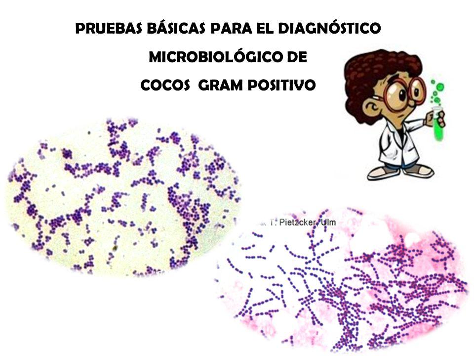 PRUEBAS BÁSICAS PARA EL DIAGNÓSTICO MICROBIOLÓGICO DE COCOS GRAM POSITIVO
