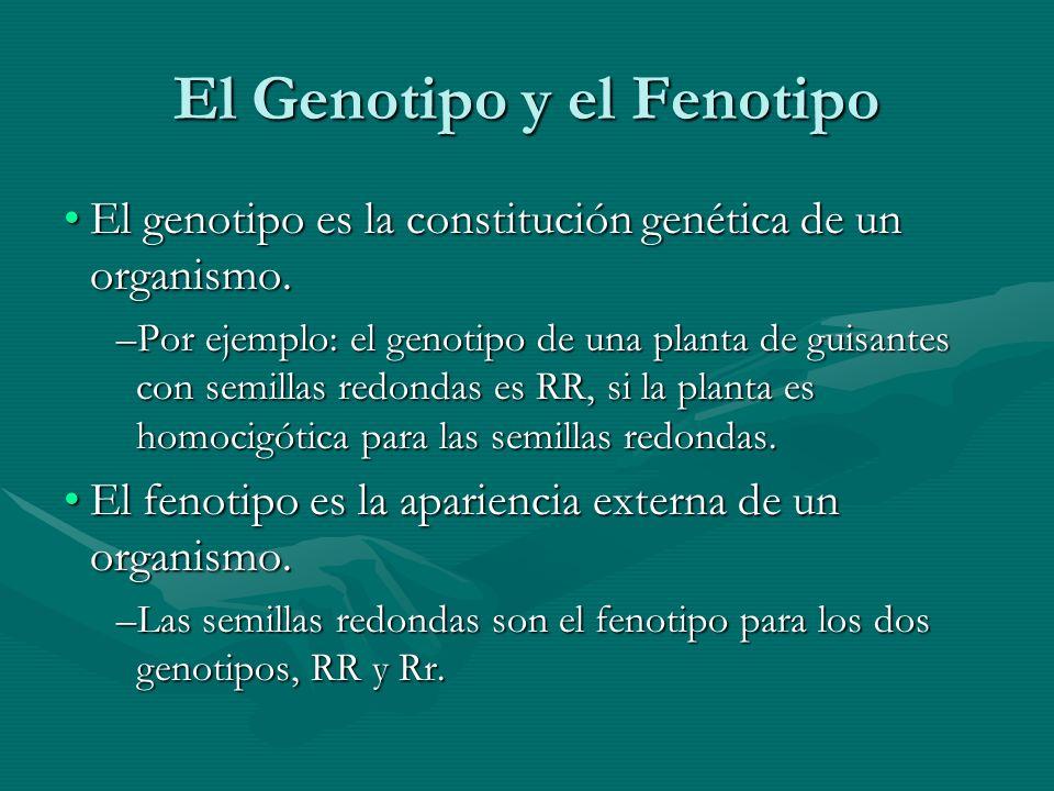 El Genotipo y el Fenotipo El genotipo es la constitución genética de un organismo.El genotipo es la constitución genética de un organismo. –Por ejempl