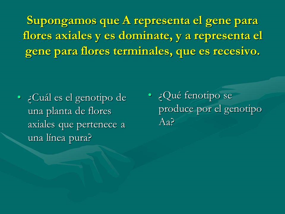 Supongamos que A representa el gene para flores axiales y es dominate, y a representa el gene para flores terminales, que es recesivo. ¿Cuál es el gen