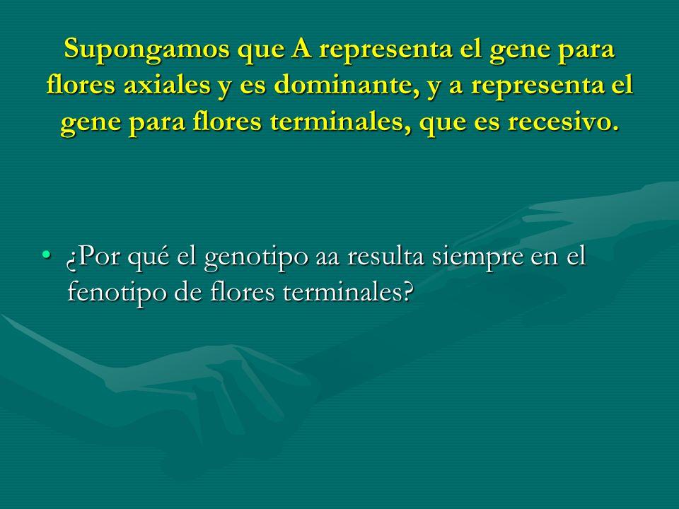 Supongamos que A representa el gene para flores axiales y es dominante, y a representa el gene para flores terminales, que es recesivo. ¿Por qué el ge