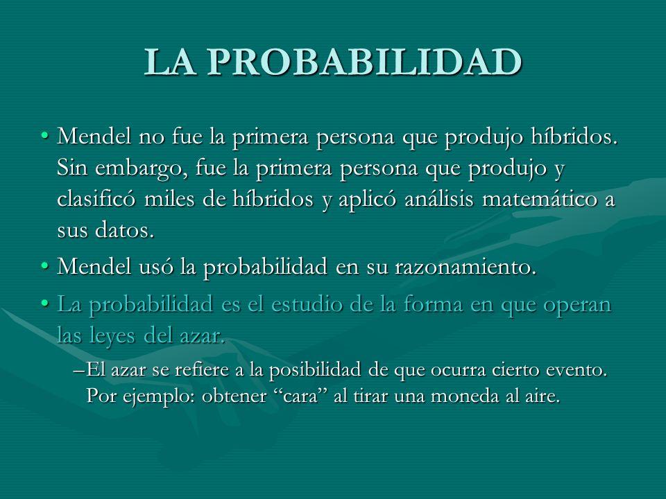 LA PROBABILIDAD Mendel no fue la primera persona que produjo híbridos. Sin embargo, fue la primera persona que produjo y clasificó miles de híbridos y