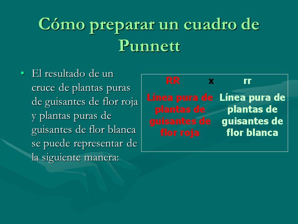 Cómo preparar un cuadro de Punnett El resultado de un cruce de plantas puras de guisantes de flor roja y plantas puras de guisantes de flor blanca se