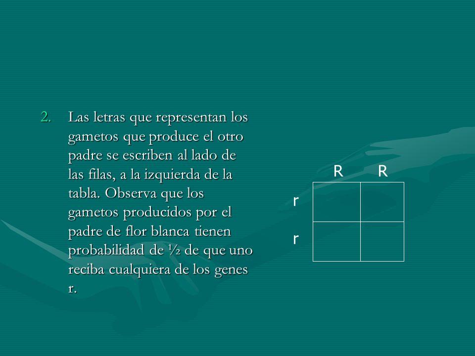 2.Las letras que representan los gametos que produce el otro padre se escriben al lado de las filas, a la izquierda de la tabla. Observa que los gamet