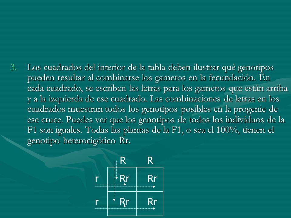 3.Los cuadrados del interior de la tabla deben ilustrar qué genotipos pueden resultar al combinarse los gametos en la fecundación. En cada cuadrado, s