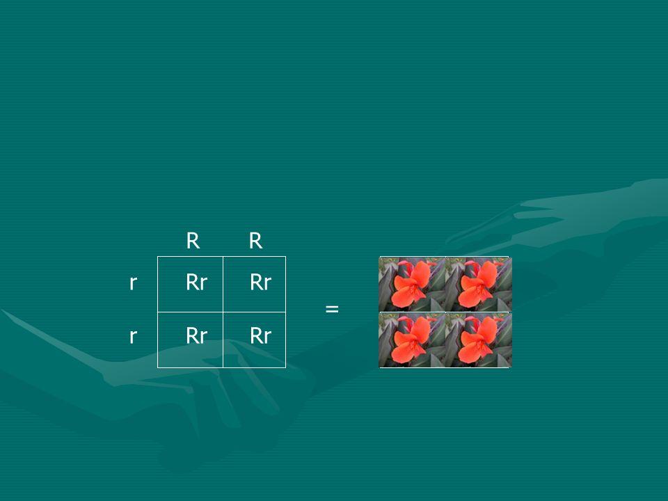 R R r Rr Rr = r Rr Rr