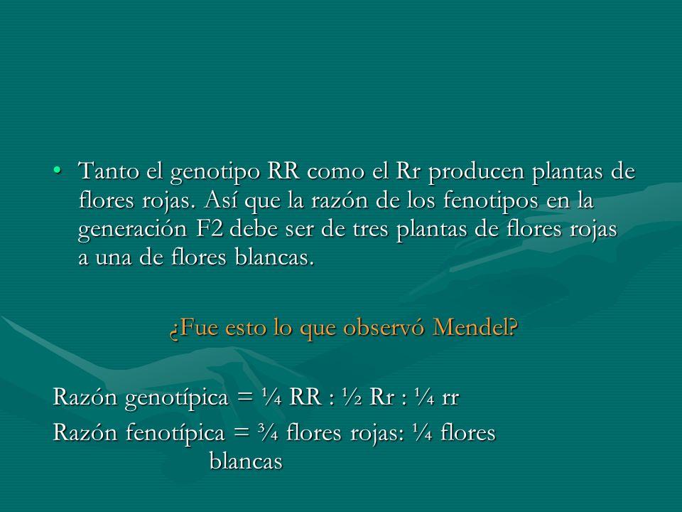 Tanto el genotipo RR como el Rr producen plantas de flores rojas. Así que la razón de los fenotipos en la generación F2 debe ser de tres plantas de fl