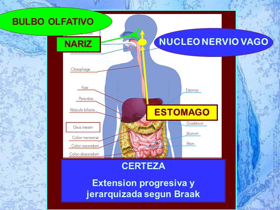 ESTOMAGO CERTEZA Extension progresiva y jerarquizada segun Braak BULBO OLFATIVO NUCLEO NERVIO VAGO NARIZ