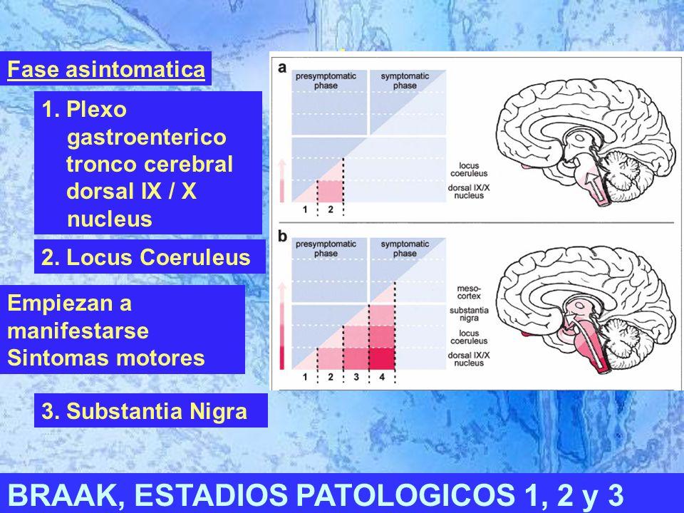 I BRAAK, ESTADIOS PATOLOGICOS 1, 2 y 3 1.