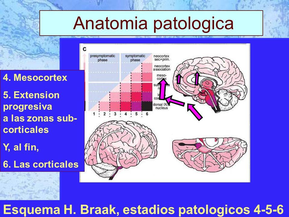 I Anatomia patologica Esquema H. Braak, estadios patologicos 4-5-6 4.