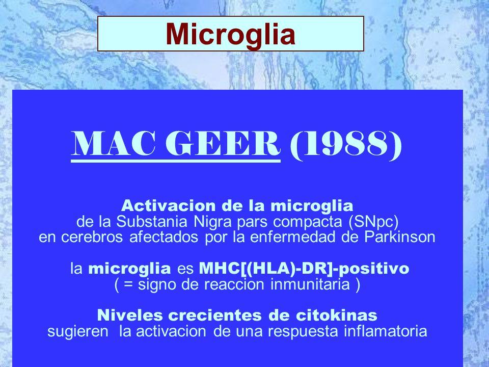 MAC GEER (1988) Activacion de la microglia de la Substania Nigra pars compacta (SNpc) en cerebros afectados por la enfermedad de Parkinson la microglia es MHC[(HLA)-DR]-positivo ( = signo de reaccion inmunitaria ) Niveles crecientes de citokinas sugieren la activacion de una respuesta inflamatoria Microglia