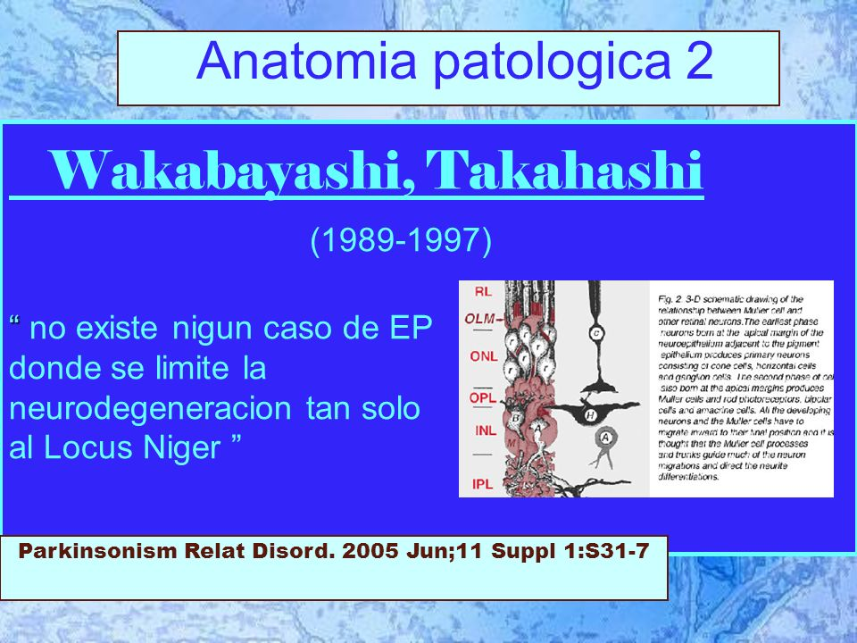 Wakabayashi, Takahashi (1989-1997) no existe nigun caso de EP donde se limite la neurodegeneracion tan solo al Locus Niger Parkinsonism Relat Disord.