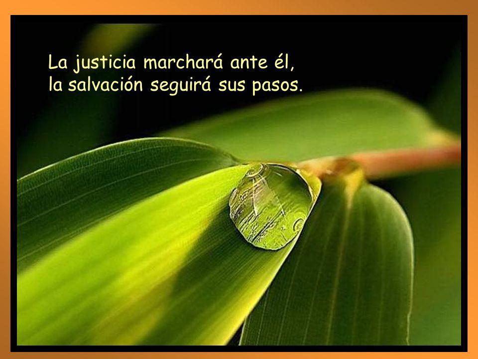 La fidelidad brota de la tierra, y la justicia mira desde el cielo; el Señor nos dará la lluvia, y nuestra tierra dará su fruto.