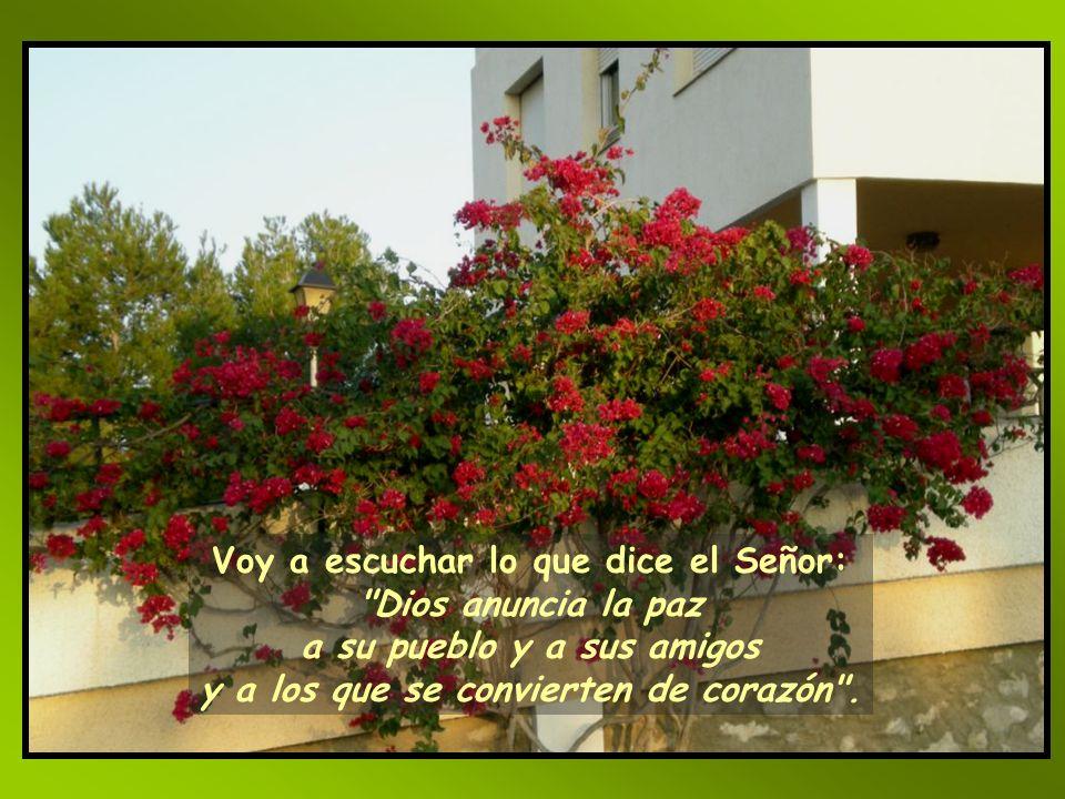 ¿No vas a devolvernos la vida, para que tu pueblo se alegre contigo? Muéstranos, Señor, tu misericordia, y danos tu salvación.