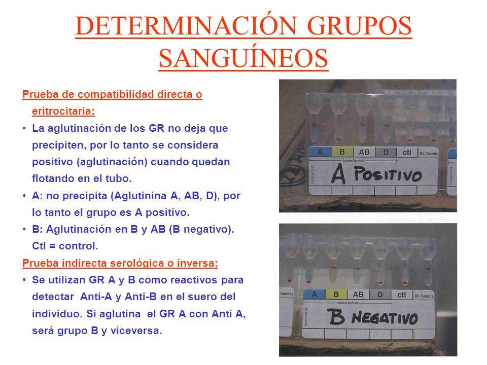 DETERMINACIÓN GRUPOS SANGUÍNEOS Prueba de compatibilidad directa o eritrocitaria: La aglutinación de los GR no deja que precipiten, por lo tanto se co