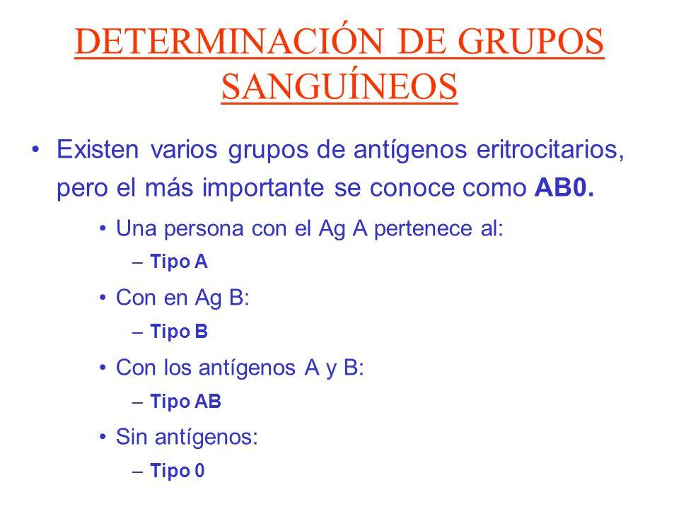 DETERMINACIÓN DE GRUPOS SANGUÍNEOS Existen varios grupos de antígenos eritrocitarios, pero el más importante se conoce como AB0. Una persona con el Ag