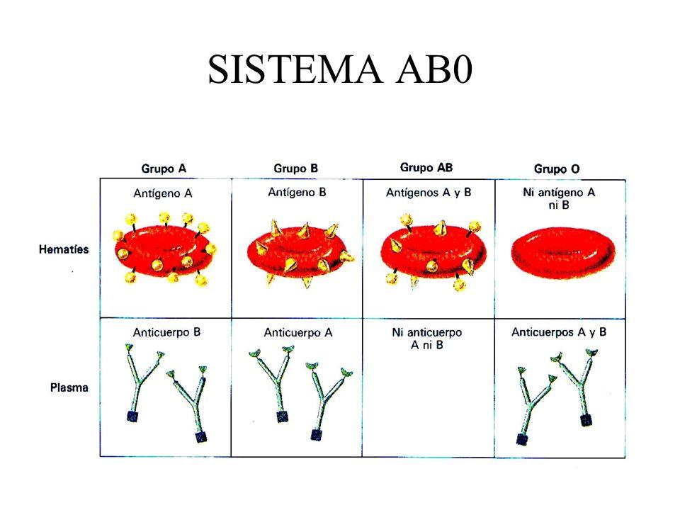 AGLUTINACIÓN Cuando se mezclan sangres de un donante y un receptor del mismo grupo (A), no se produce aglutinación porque en la sangre del receptor solo hay Ac anti B.