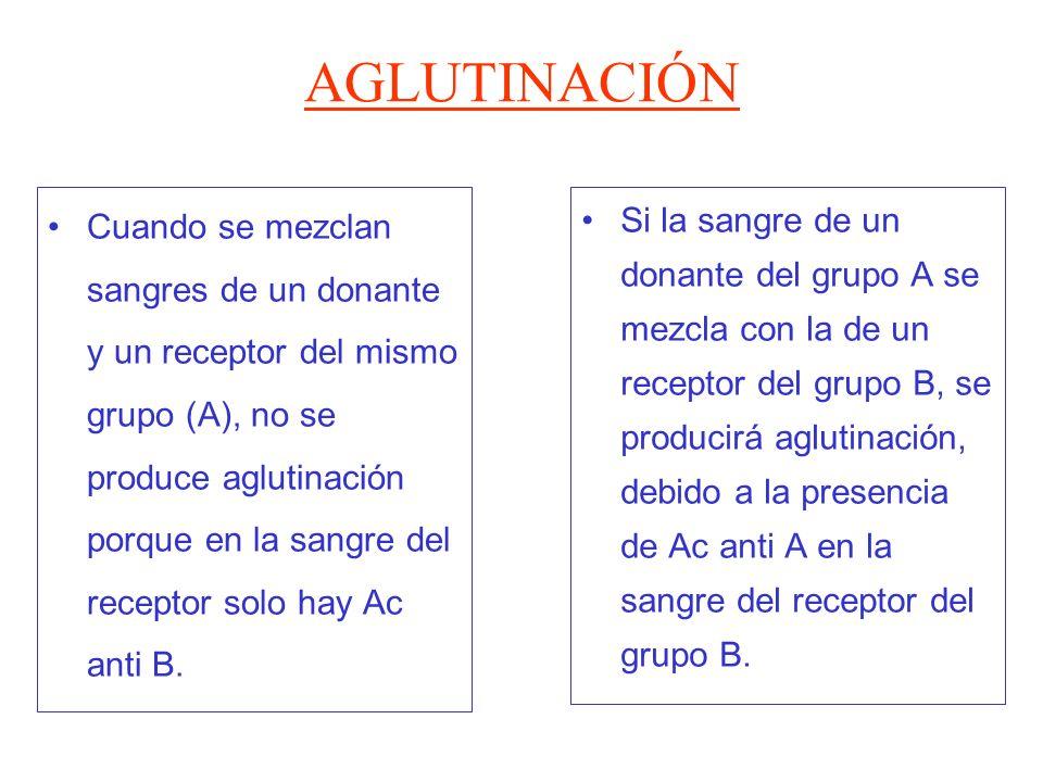 AGLUTINACIÓN Cuando se mezclan sangres de un donante y un receptor del mismo grupo (A), no se produce aglutinación porque en la sangre del receptor so