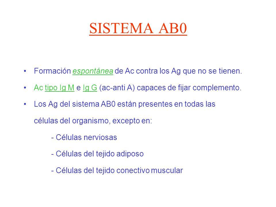SISTEMA AB0 Formación espontánea de Ac contra los Ag que no se tienen. Ac tipo Ig M e Ig G (ac-anti A) capaces de fijar complemento. Los Ag del sistem