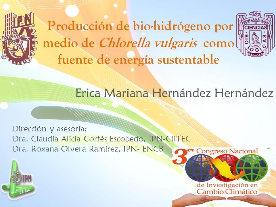 Producción de bio-hidrógeno por medio de Chlorella vulgaris como fuente de energía sustentable Erica Mariana Hernández Hernández Dirección y asesoría: