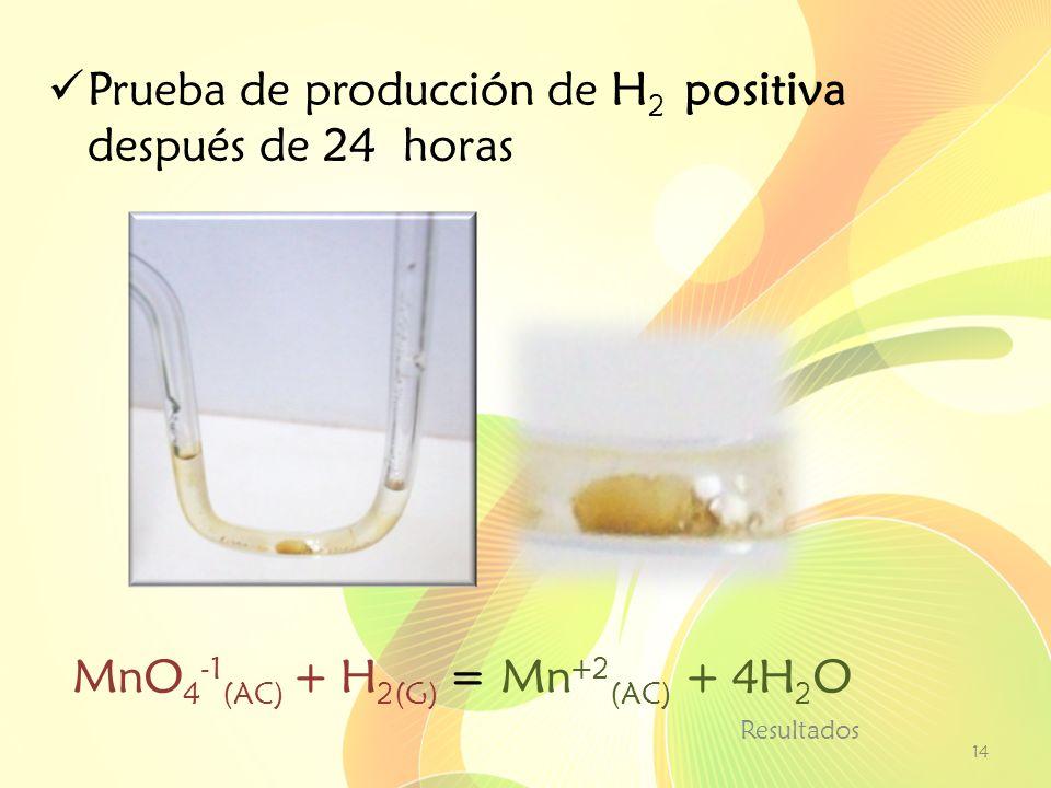 Prueba de producción de H 2 positiva después de 24 horas Resultados 14 MnO 4 -1 (AC) + H 2(G) = Mn +2 (AC) + 4H 2 O