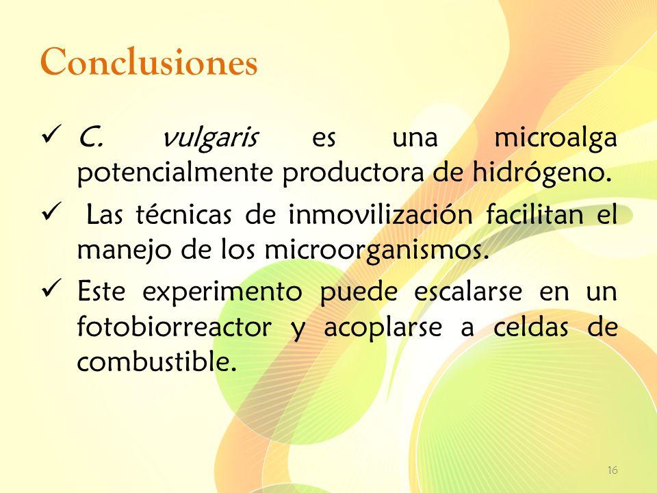 Conclusiones C. vulgaris es una microalga potencialmente productora de hidrógeno. Las técnicas de inmovilización facilitan el manejo de los microorgan