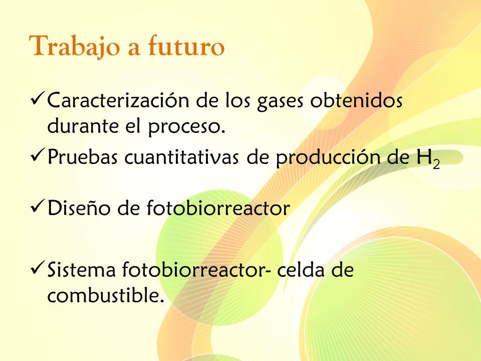 Trabajo a futuro Caracterización de los gases obtenidos durante el proceso. Pruebas cuantitativas de producción de H 2 Diseño de fotobiorreactor Siste