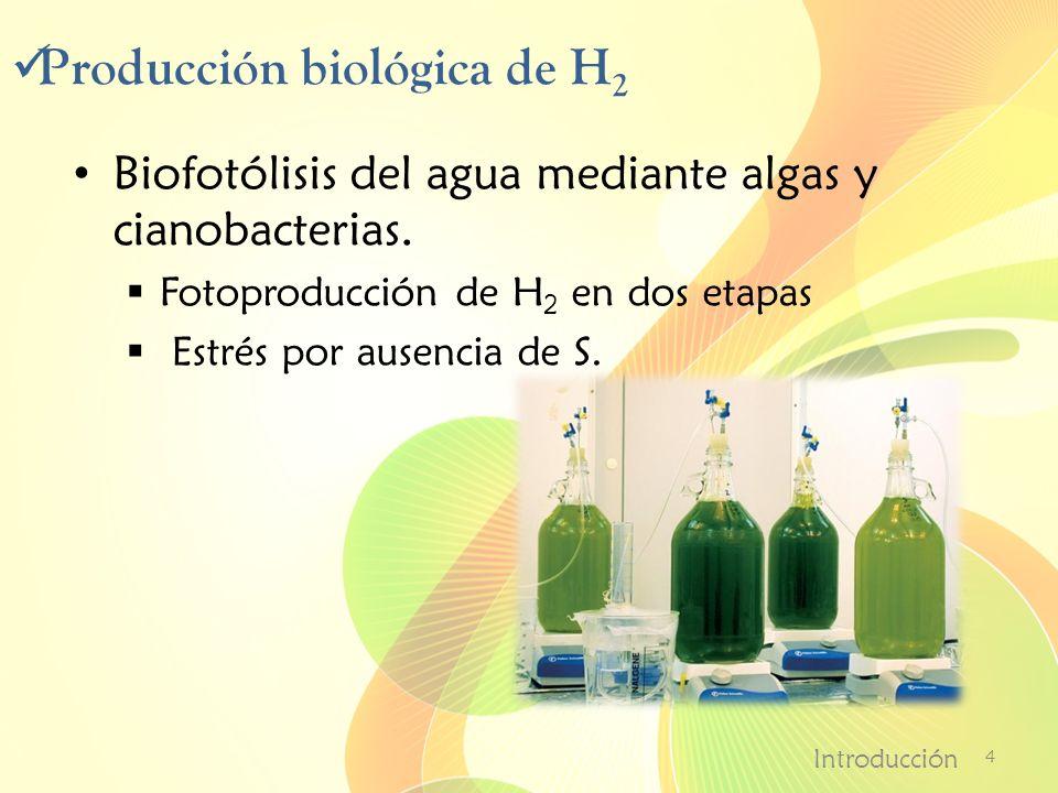 Producción biológica de H 2 Biofotólisis del agua mediante algas y cianobacterias. Fotoproducción de H 2 en dos etapas Estrés por ausencia de S. Intro