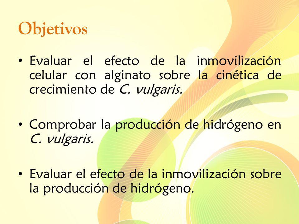 Objetivos Evaluar el efecto de la inmovilización celular con alginato sobre la cinética de crecimiento de C. vulgaris. Comprobar la producción de hidr