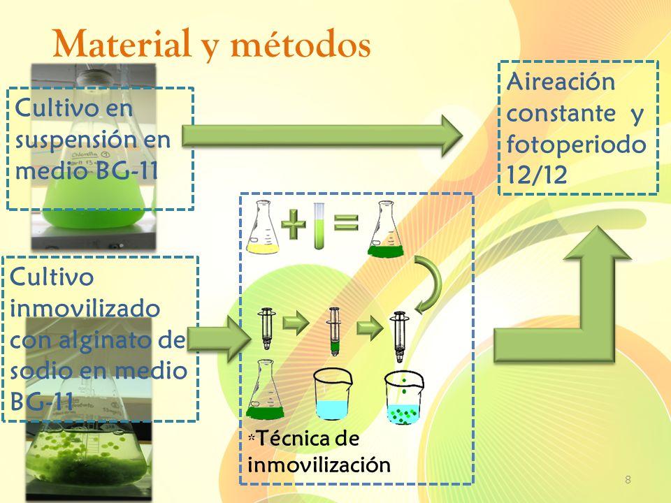 Material y métodos 8 * Técnica de inmovilización Cultivo en suspensión en medio BG-11 Cultivo inmovilizado con alginato de sodio en medio BG-11 Aireac