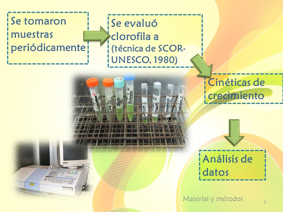 Material y métodos 9 Se tomaron muestras periódicamente Se evaluó clorofila a (técnica de SCOR- UNESCO, 1980) Cinéticas de crecimiento Análisis de dat