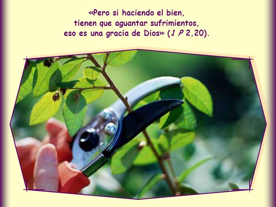 Además, de este modo, mediante el amor, podrán llevar hasta Cristo a quien no los comprende.