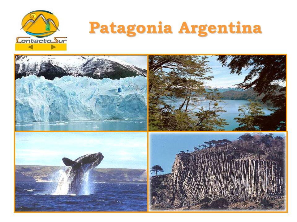 PATAGONIA ARGENTINA Podrán obtener más detalles de los servicios y las excursiones propuestas, como así también de otras alternativas opcionales, en nuestra página WEB www.contactosur.com