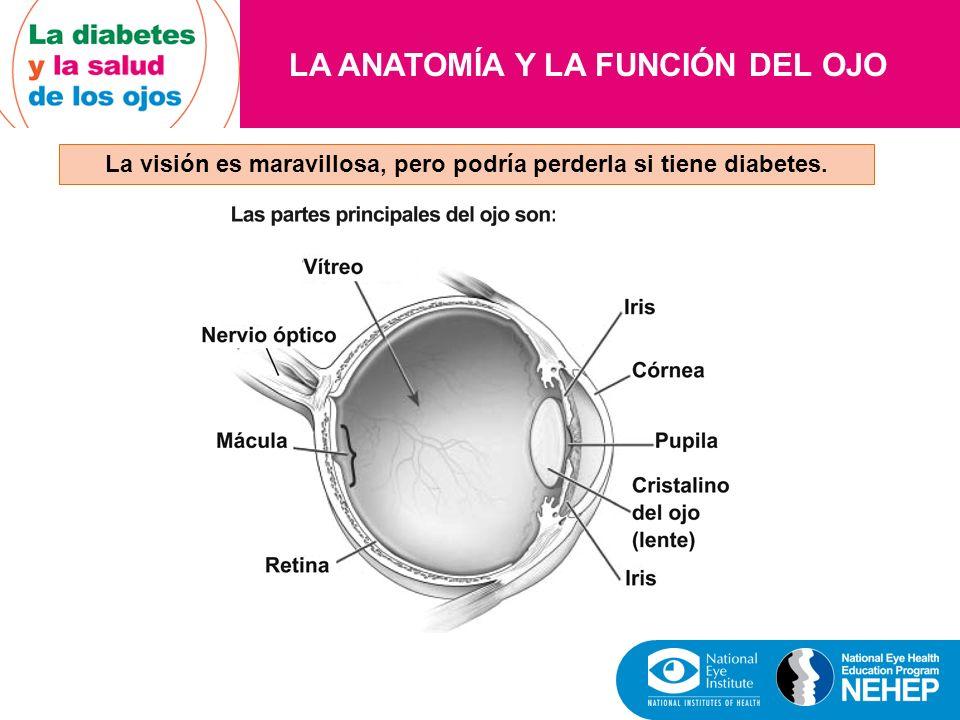 EL EXAMEN DE LOS OJOS CON DILATACIÓN DE LAS PUPILAS El examen de los ojos con dilatación de las pupilas permite al oculista ver más del interior de los ojos para detectar señales de enfermedad.