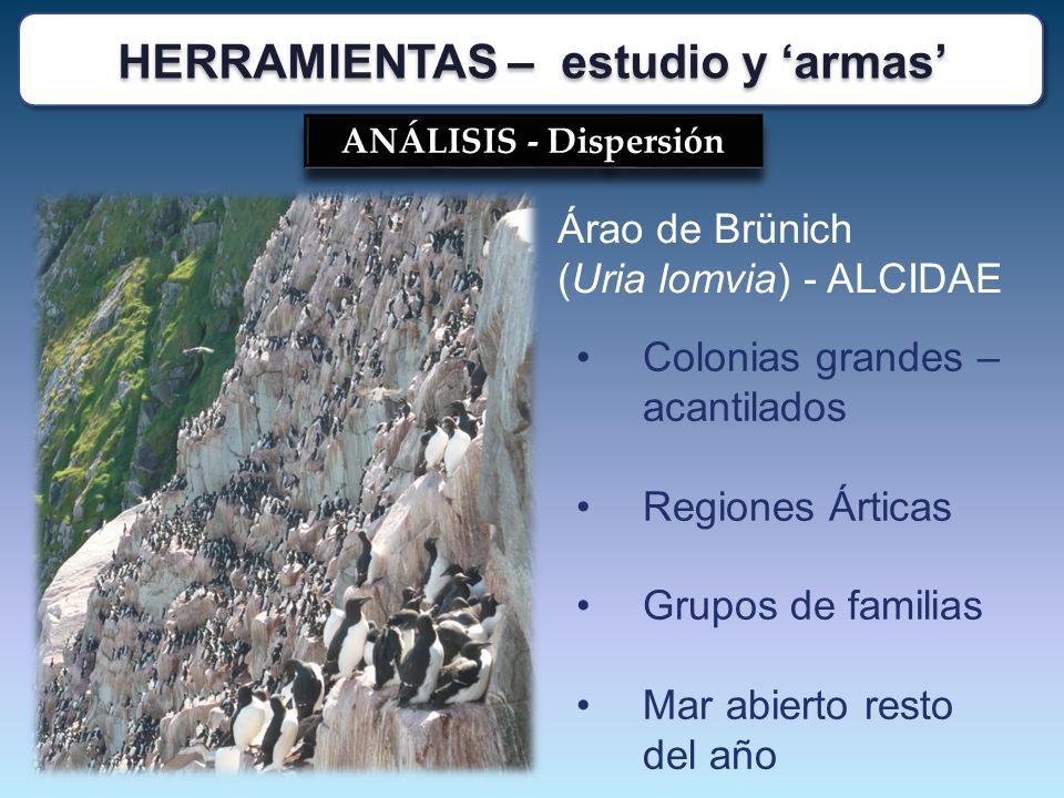 ANÁLISIS - Dispersión Árao de Brünich (Uria lomvia) - ALCIDAE Colonias grandes – acantilados Regiones Árticas Grupos de familias Mar abierto resto del